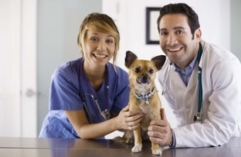 Veterinarian and staff member examine a dog.