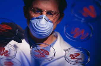 Virologists are essential to the study of viruses.