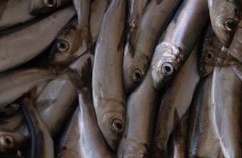 Anchovies and other kinds of seafood contain high levels of purines.