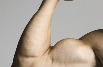 The biceps muscles lie at the front side of your upper arms.