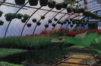A horticulturist may breed plants and ensure their health.