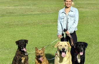 Offering pet services, such as dog walking, is a flexible part-time business option.