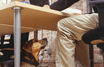 Well-behaved animals are often welcomed by colleagues.