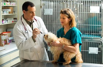 Vet techs sometimes hold animals so that veterinarians can conduct examinations or administer medication.