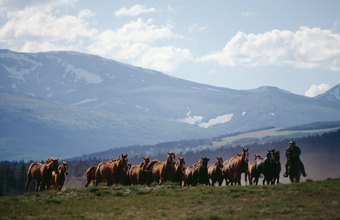 Ranchers' work revolves around their livestock.