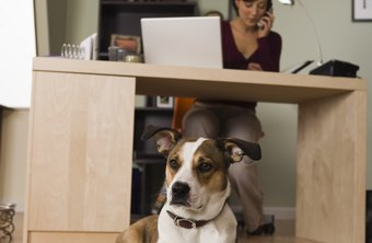 Dogs bring several staff benefits when allowed in the workplace.