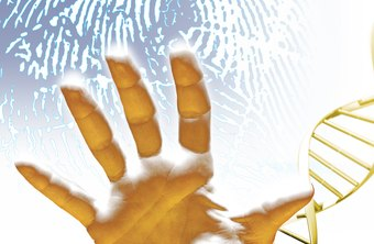 Crime lab technicians use fingerprints and DNA to identify suspects.