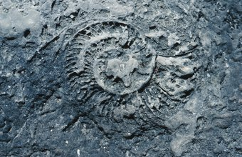 Paleontologists study fossils to learn the history of life.