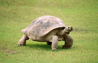 The exercise mimics the breathing of the tortoise, a symbol of longevity.