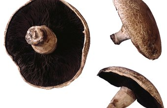 Portobello mushroom stems are good to use when preparing duxelles.