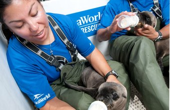 Wildlife rehabilitators and most other animal rescue workers don't need college degrees.