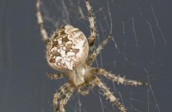 Arachnologists are paid to conduct research on spiders.