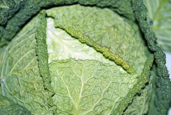 Collard greens contain a wide array of nutrients.