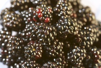 A 1/2-cup serving of blackberries provides about 4 grams of fiber.