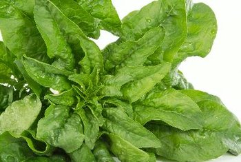Spinach is low in protein, but packed with vitamins and minerals.