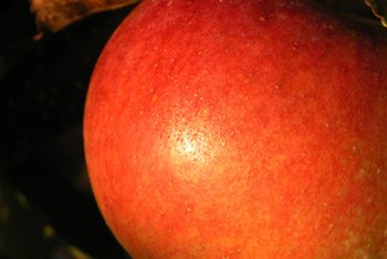 One small apple is one serving from the fruits food group.