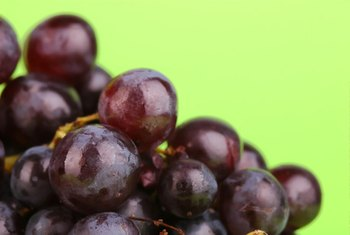 Grape seeds produce an oil with biologically active compounds.