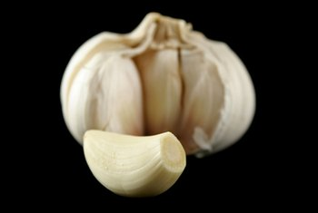 Chewing garlic produces alllicin, which has medicinal qualities.
