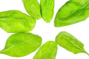 You can cook the delicate leaves of baby spinach in numerous healthy ways.
