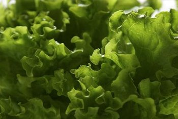 Green lettuce contains vitamins A and K.