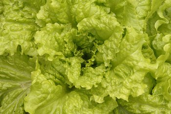 Lettuce is low in fat and calories.