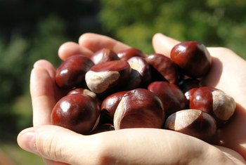 Chestnuts contribute to a small amount of your potassium needs.