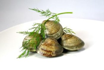 Clams are an excellent source of vitamin B12.