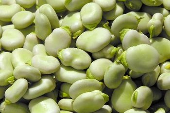 Broad beans are high in protein and fiber.