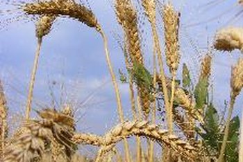 Wheat and wheat products contain gluten.