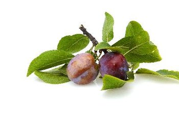 Plums with darker internal flesh have higher antioxidant contents.