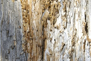 Warped wood may indicate termite presence.