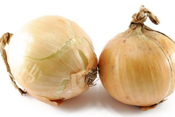 A few foods, including onions contain oligofructose.