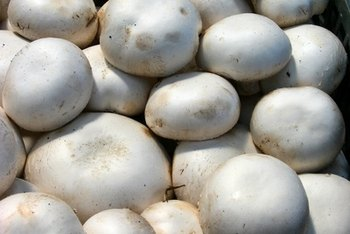 Mushrooms contain B vitamins, including niacin.