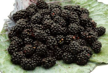 Blackberries have a number of healthy benefits.