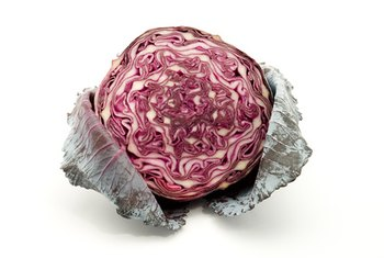 Red cabbage is packed with nutrients.