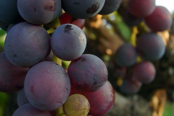 Grape seeds contain antioxidants with possible health benefits.