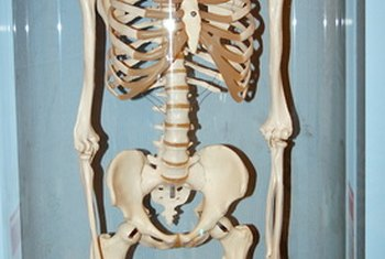 Bones are made mostly of minerals.