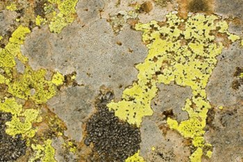 Mold is unatttracive, but it's unclear how unhealthy it is.