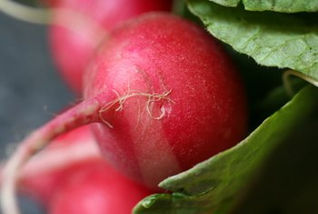 A serving of radishes provides nearly 3 percent of the RDA of potassium for an adult.