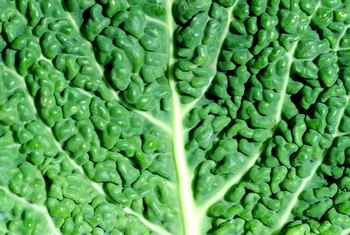 Collard greens and other cruciferous vegetables are a good source of catalase.