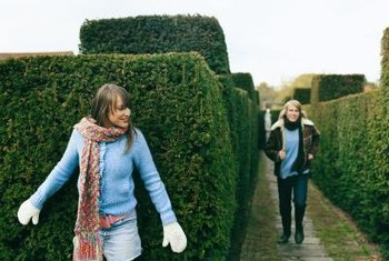 Hedges are a perfect way to define garden spaces.