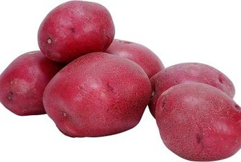 Red potatoes can be harvested young for new potatoes or allowed to mature and stored for winter.