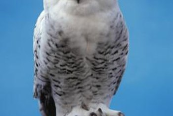 Harry received his snowy owl, Hedwig, for his 11th birthday.
