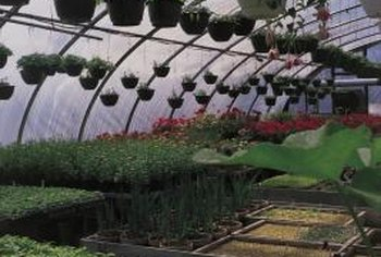 Quonset or hoop greenhouses are shaped like a big, half cylinder.