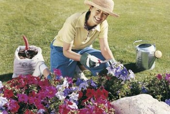 Annual flowers, such as petunias, make excellent ground covers in the rose bed.