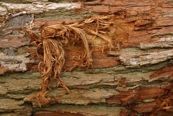 Tree bark provides an excellent medium to retain moisture.