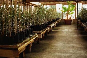 Setting up a hydroponic system in a greenhouse saves on lighting costs.