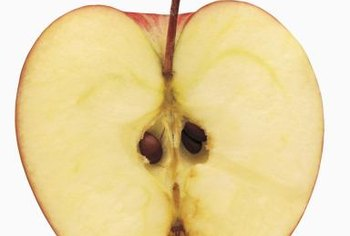 Seeds taken from apples seldom grow true to the parent.