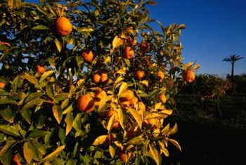 Most causes of dry fruit are fairly simple to address in subsequent growing seasons.