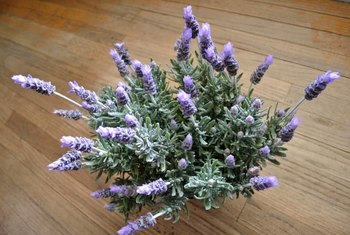 All types of lavender have flowers with a strong, heady fragrance.